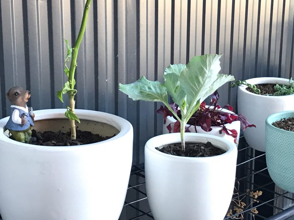 outdoor garden styling for less